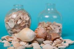 在绿色背景的海壳 免版税图库摄影