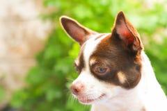 在绿色背景的特写镜头狗 库存照片