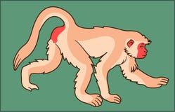 在绿色背景的猴子动物 图库摄影