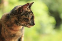 在绿色背景的红色猫 免版税库存图片