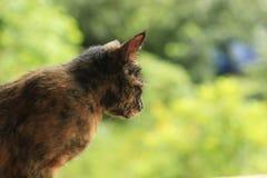 在绿色背景的红色猫 免版税库存照片