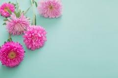 在绿色背景的翠菊花 库存图片