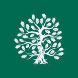 在绿色背景隔绝的巨大和神圣的橡树剪影商标徽章 皇族释放例证