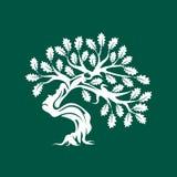 在绿色背景隔绝的巨大和神圣的橡树剪影商标徽章 库存例证