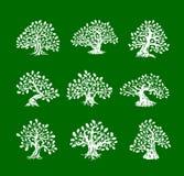 在绿色背景隔绝的巨大和神圣的橡树剪影商标 库存例证