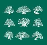 在绿色背景隔绝的巨大和神圣的橡树剪影商标 向量例证