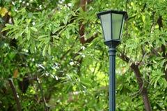 在绿色自然的室外老灯笼在公园背景中 免版税库存图片