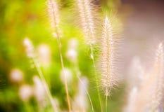在绿色自然的植物芦苇 库存照片