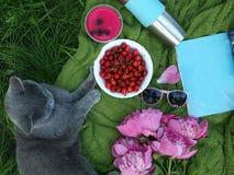 在绿色草本的一顿可爱的夏天野餐由宠物 在一块蓝色布料的一顿野餐放置了, A樱桃杯子,一只灰色英国猫 库存图片