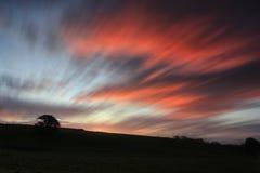 在绿色草甸的橡树在红色天空 免版税库存照片