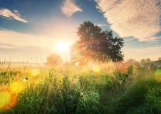 在绿色草甸的生动的夏天日出和光束通过树早晨 库存图片