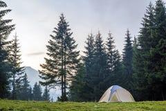 在绿色草甸的白色和蓝色旅游帐篷在有美丽的山的常青冷杉木森林之间在距离 旅游业,胜过 免版税库存图片