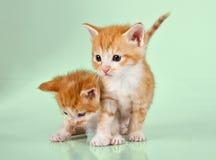 在绿色表面的二只姜小猫 免版税图库摄影