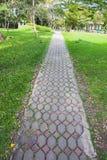 在绿色象草的走道 免版税库存照片
