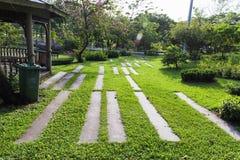 在绿色象草的走道 库存照片