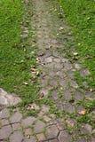 在绿色象草的走道 免版税库存图片