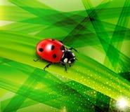 在绿色豪华的草背景的瓢虫  库存照片