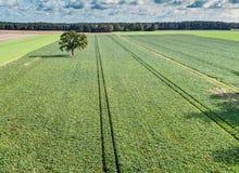 在绿色领域、森林和剧烈的天空,天线vi的偏僻的树 免版税库存照片