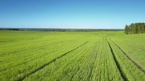 在绿色领域上的接近的行动对反对蓝天的森林 影视素材
