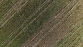在绿色领域上的飞行在日落早期的春天,空中全景照片 图库摄影