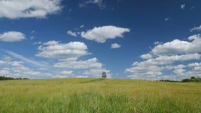 在绿色领域的偏僻的树反对蓝天背景 影视素材