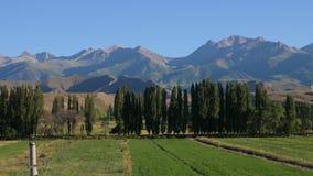 在绿色领域的自然风景在蓝天背景的树和山 股票视频