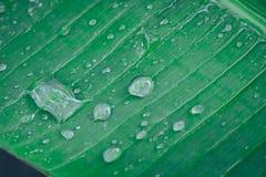 在绿色香蕉叶子背景的水下落 免版税库存照片