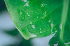 在绿色香蕉叶子背景的水下落 免版税库存图片