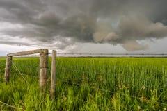 在绿色麦田的风雨如磐的风景 库存照片