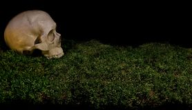 在绿色黑暗的森林青苔的万圣夜可怕人的头骨 免版税库存照片
