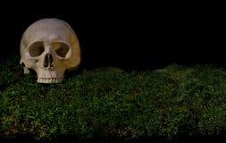 在绿色黑暗的森林青苔的万圣夜可怕人的头骨 图库摄影