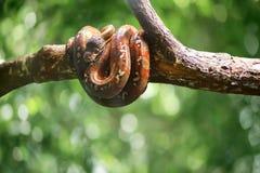 在绿色bokeh的野生蛇离开backround r 免版税库存照片