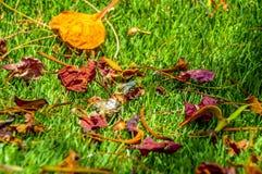 在绿草关闭的干燥叶子 库存照片
