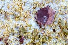 在绿草和落叶的第一雪在秋天 以后的冬天的标志 E 库存图片