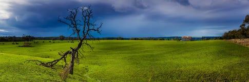 在绿草域的一个停止的结构树与雨云 免版税库存图片