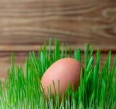 在绿草复活节健身饮食健康饮食的鸡蛋 库存图片