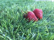 在绿草的两strawberrys 免版税库存照片