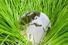 在绿草的地球 库存图片