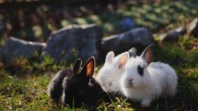 在绿草的小的兔子在春日 股票录像