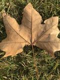 在绿草的干黄色叶子 库存照片