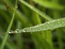 在绿草的新鲜的露水早晨 免版税库存图片