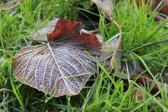 在绿草的树叶子 免版税库存图片