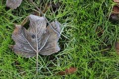 在绿草的树叶子 库存照片
