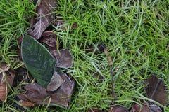 在绿草的树叶子 免版税库存照片
