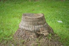 在绿草的树桩 库存照片