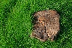 在绿草的树桩 图库摄影