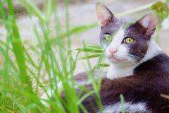在绿草的猫 免版税库存图片