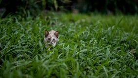 在绿草的猫 库存照片