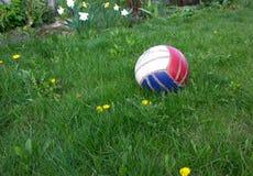 在绿草的球在庭院里 免版税图库摄影