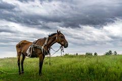 在绿草的皮包骨头的马 免版税库存图片